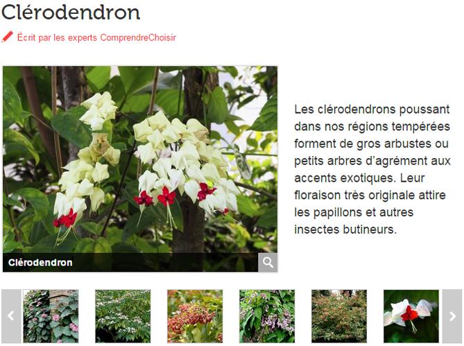 Bien choisir sa plante elle d coration for Plante verte exterieur jardin