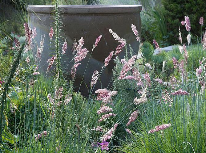 Nos conseils pour faire pousser des gramin es elle for Azote pour jardin
