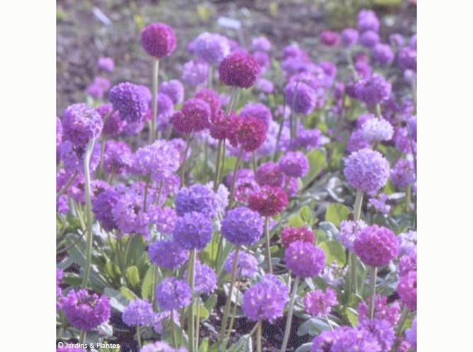 Nos 5 fleurs pr f r es pour l hiver elle d coration for Plantes exterieur hiver