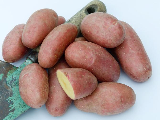 5 vari t s de pommes de terre conna tre elle d coration. Black Bedroom Furniture Sets. Home Design Ideas