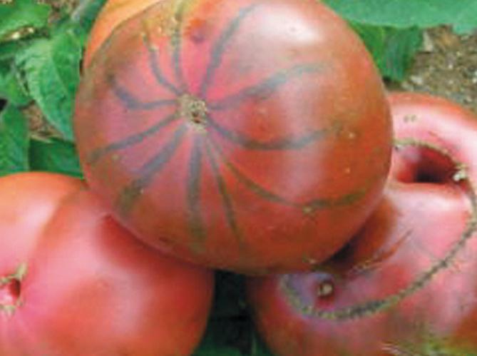 Nos vari t s de tomates pr f r es elle d coration - Noir de crimee ...