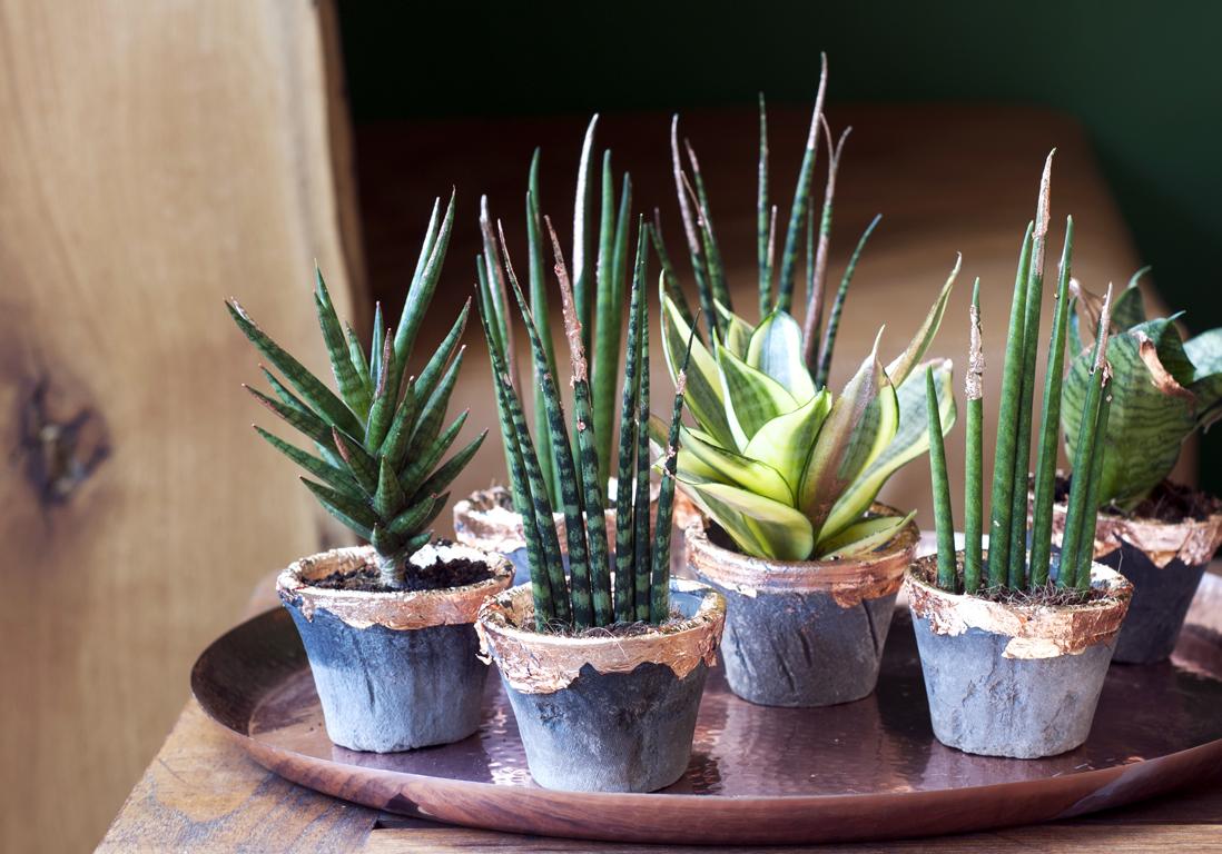 notre plan de bataille infaillible pour des plantes qui vaincront l hiver elle d coration. Black Bedroom Furniture Sets. Home Design Ideas