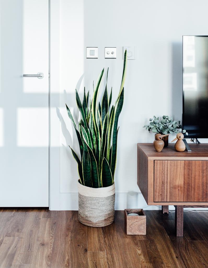 quelle plante correspond votre signe astrologique elle d coration. Black Bedroom Furniture Sets. Home Design Ideas